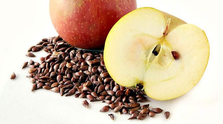 Семечки яблока ядовиты