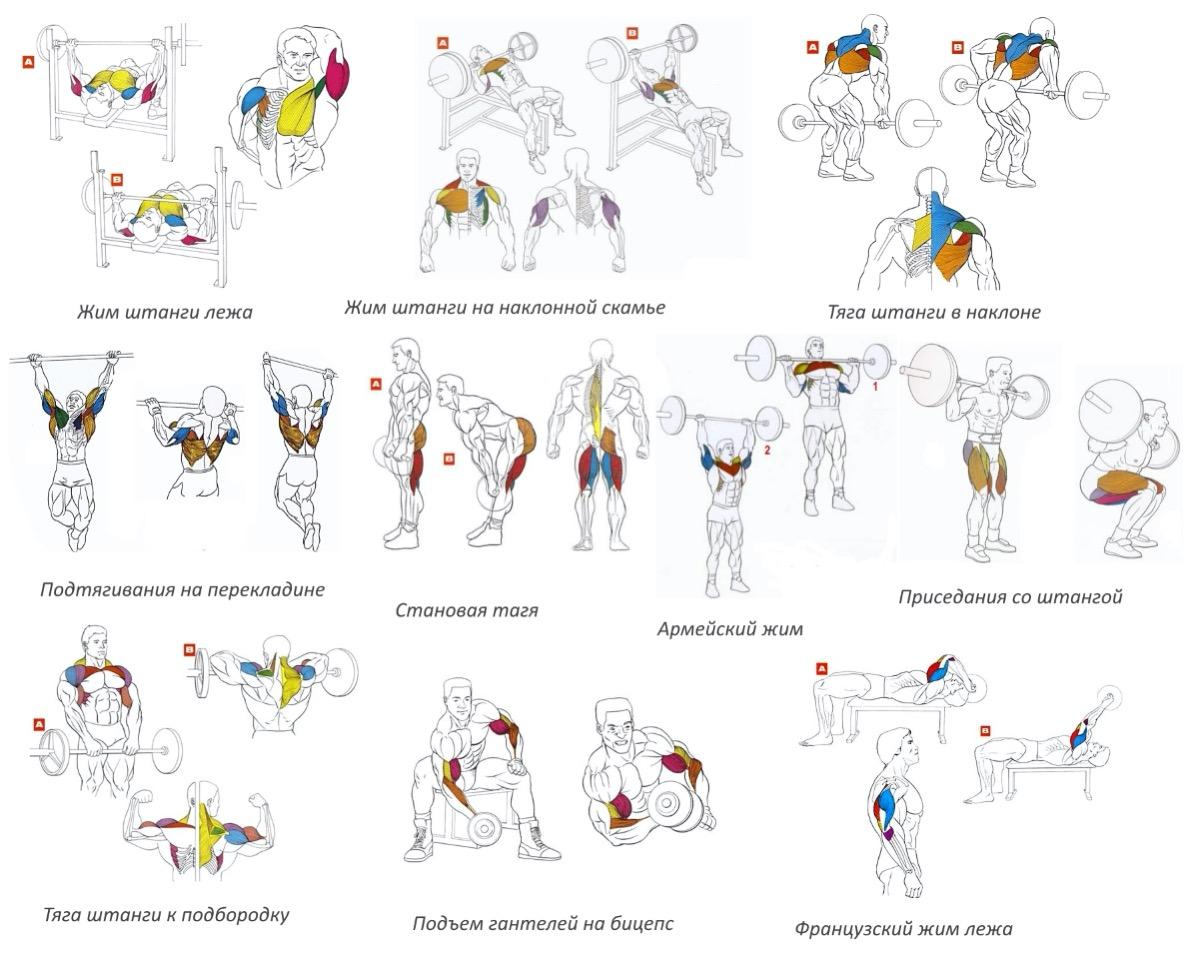 упражнения для разных групп мышц в картинках для успешного